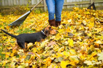 What's Your Fall Home Maintenance Personality?