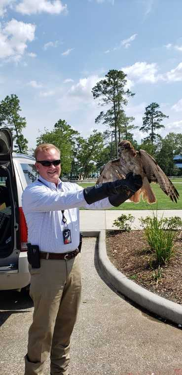 Montgomery County Sheriff Rand Henderson Releases Hawk