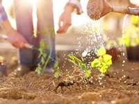 Gardening in May: Prepping, Planting and Plenty of Watering