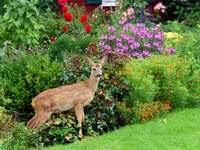 Gardening in October: Flora and Fauna in the Forecast