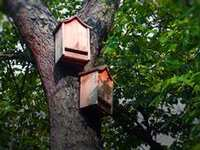 How to Build a Bat House - and Why You Should