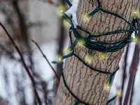 How to Put Christmas Lights On a Tree Outdoors