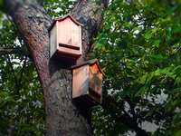 How To Build A Bat House (And Why You Should!)